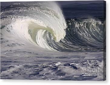 North Shore Wave Curl Canvas Print by Vince Cavataio