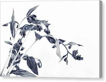 Northern Bluebells II Canvas Print by Priska Wettstein