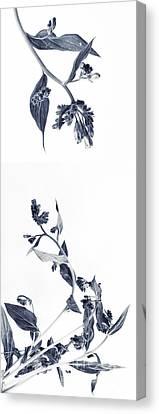 Northern Bluebells Canvas Print by Priska Wettstein