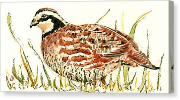 Quail Canvas Print - Northern Bobwhite by Juan  Bosco