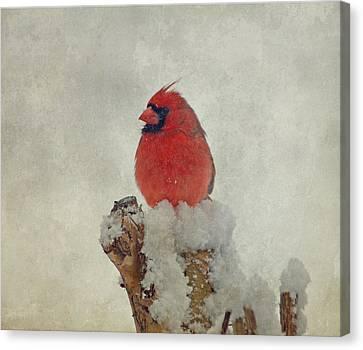 Northern Cardinal Canvas Print by Sandy Keeton