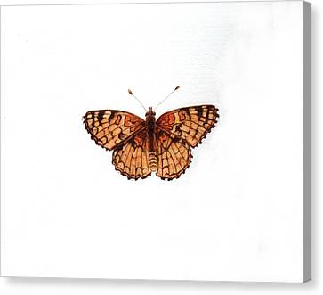 Northern Checkerspot Butterfly Canvas Print by Inger Hutton