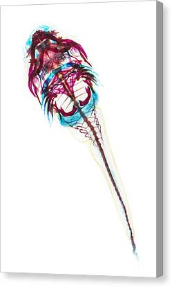 Northern Clingfish Canvas Print by Adam Summers