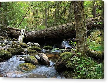 Northern Creek Canvas Print by Tim Rice