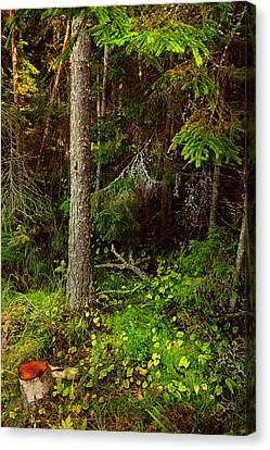 Northern Forest 1 Canvas Print by Jenny Rainbow