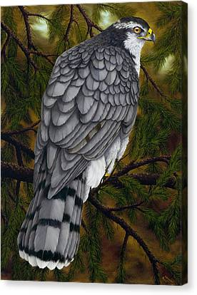 Northern Goshawk Canvas Print by Rick Bainbridge