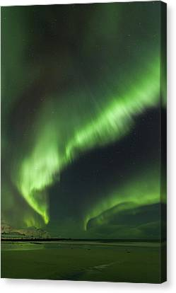 Northern Lights Lofoten Islands Norway Canvas Print by Sandra Schaenzer