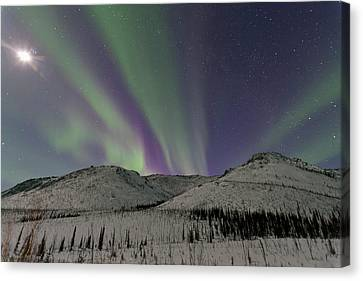 Northern Lights Shimmer Over The White Canvas Print by Hugh Rose
