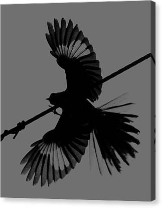 Canvas Print featuring the photograph Northern Mockingbird by Leticia Latocki