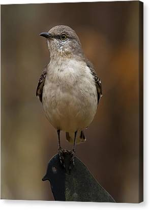 Canvas Print featuring the photograph Northern Mockingbird by Robert L Jackson