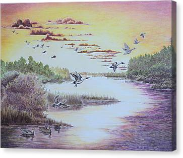 Northern Pintails At Sunset Canvas Print by Gina Gahagan