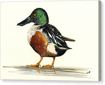 Northern Shoveler Canvas Print by Juan  Bosco