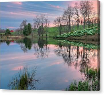 Northfield Daffodils Sunset Canvas Print by Bill Wakeley