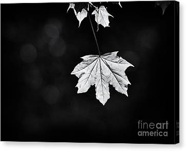 Norway Canvas Print - Norway Maple Leaf Monochrome by Tim Gainey