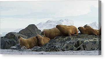 Norway, Svalbard Canvas Print