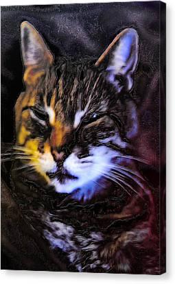 Not Amused Canvas Print by Carlee Ojeda