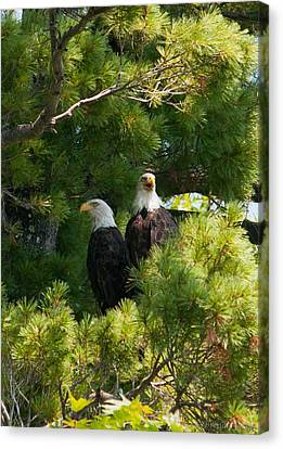 Canvas Print featuring the photograph Not Listening by Brenda Jacobs