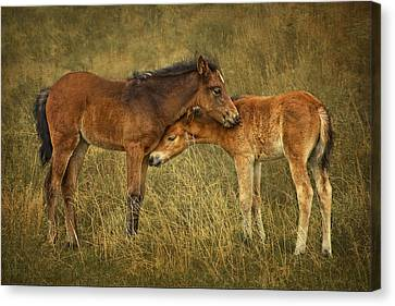 Burger Canvas Print - Not So Wild Wild Horses by Priscilla Burgers