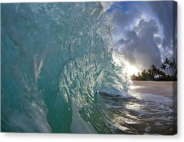 Coconut Curl Canvas Print by Sean Davey