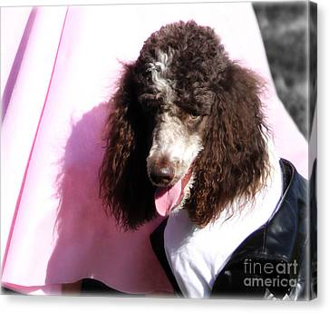 Not Your Standard Poodle Canvas Print by Steven  Digman