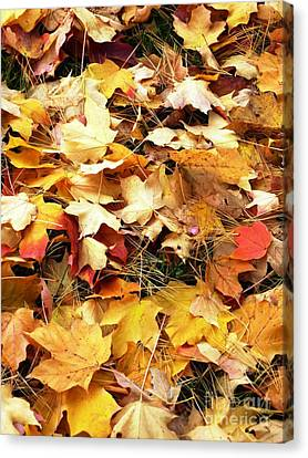 Canvas Print featuring the photograph Nothing But Leaves by Mike Ste Marie