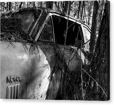 Nova In The Woods In Black And White Canvas Print by Greg Mimbs