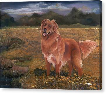Nova Scotia Duck Tolling Retriever Canvas Print