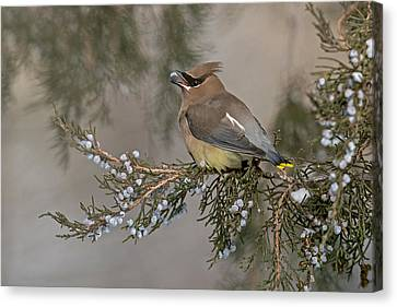 November Feast Canvas Print by Sandy Sisti