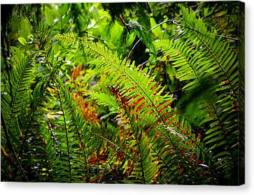 Canvas Print featuring the photograph November Ferns by Adria Trail