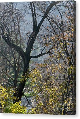 November Morning Canvas Print by Melissa Stoudt