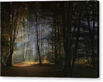 November Morning Canvas Print by Norbert Maier