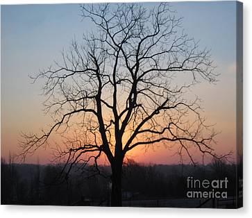 November Walnut Tree At Sunrise Canvas Print