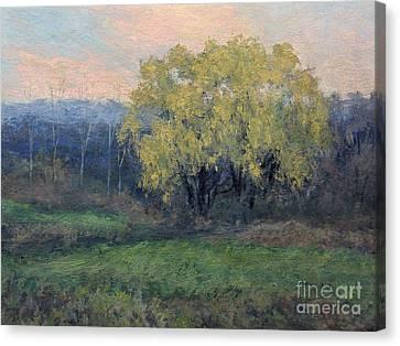 November Willow Canvas Print by Gregory Arnett