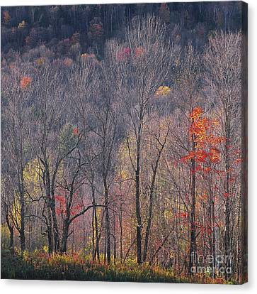 November Woods Canvas Print by Alan L Graham