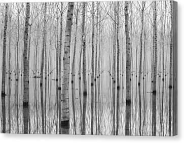 Novembre 2014 Canvas Print by Aglioni Simone