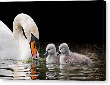 Nestled With Love Canvas Print - Now Watch Carefully by Gill Billington