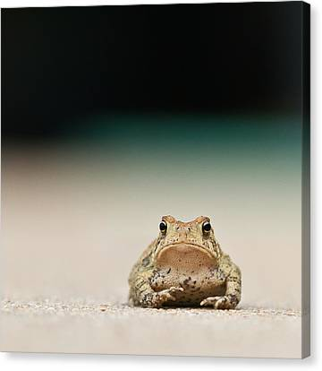 Frog Canvas Print - Nowhere Man by Annette Hugen