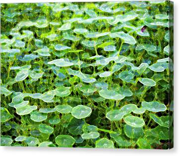 Nuanced Nasturtium Canvas Print by Joe Schofield