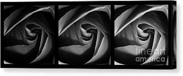 Nuances 1 Canvas Print by Andrea Anderegg