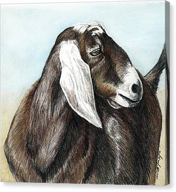 Nubian Goat Canvas Print