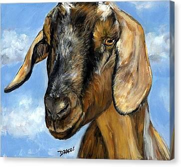 Nubian Goat Portrait Canvas Print by Dottie Dracos