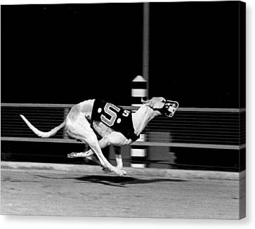Number 5 Flys Down The Stretch Canvas Print
