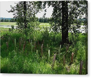 Nurturing Trees To Grow Canvas Print by Lizbeth Bostrom
