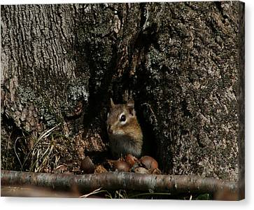 Nut Therapy  Canvas Print by Neal Eslinger