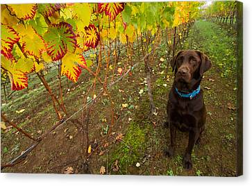 Nute Watches The Vines Canvas Print by Jean Noren