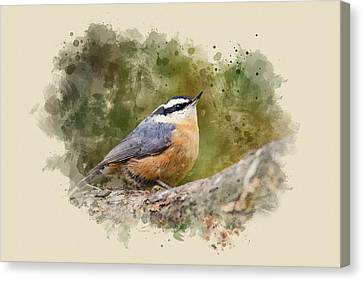 Animal Canvas Print - Nuthatch Watercolor Art by Christina Rollo