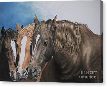 Forelock Canvas Print - Nuzzle To Nuzzle by Joni Beinborn