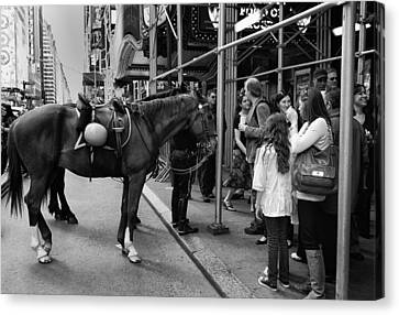 Nyc Police Horse Canvas Print by Mark Jordan