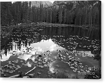 Nymph Lake Canvas Print