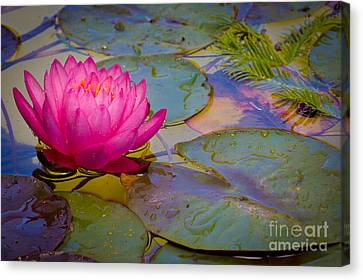 Nymphaeaceae Canvas Print by Inge Johnsson